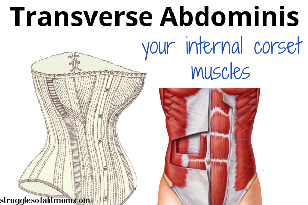 picture of a corset and transverse abdominis muscles to show your core is an internal corset